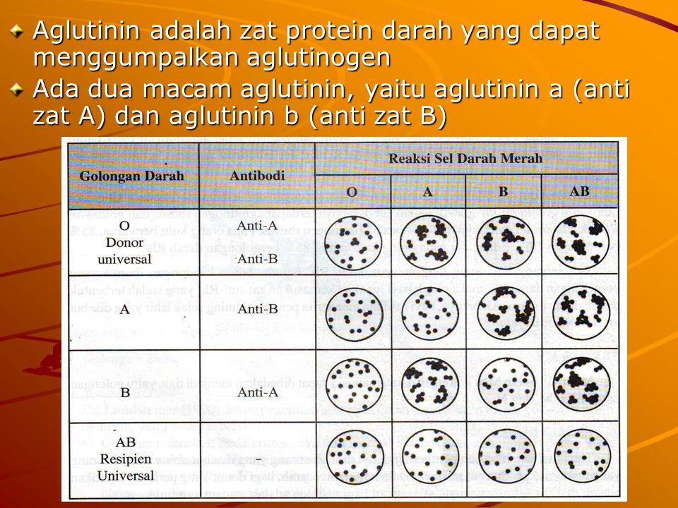 Aglutinin adalah zat protein darah yang dapat menggumpalkan aglutinogen
