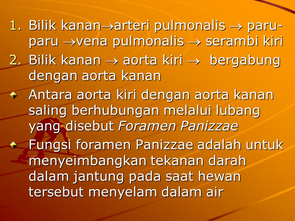 Bilik kananarteri pulmonalis  paru-paru vena pulmonalis  serambi kiri