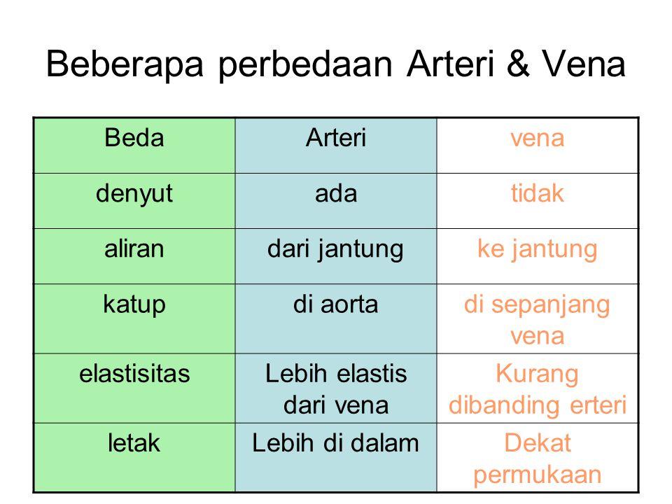 Beberapa perbedaan Arteri & Vena