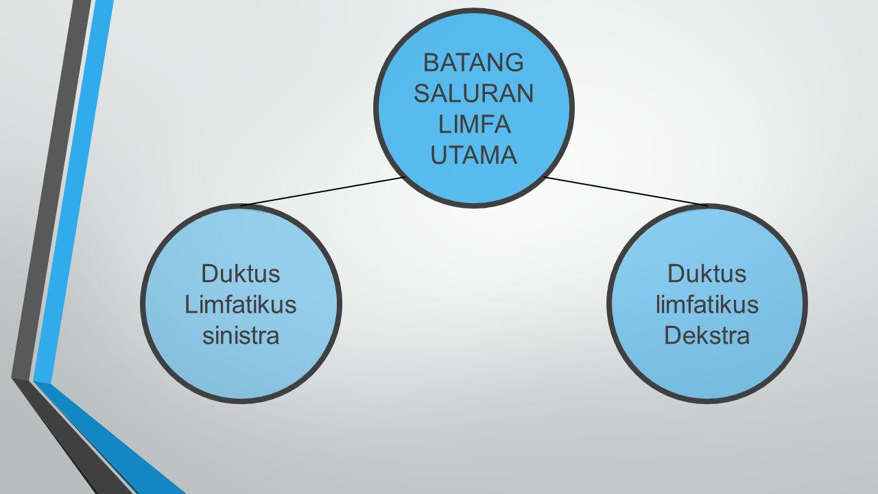 BATANG SALURAN LIMFA UTAMA