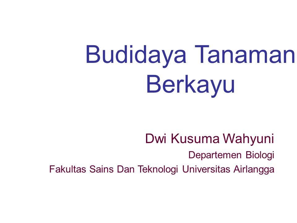 Budidaya Tanaman Berkayu
