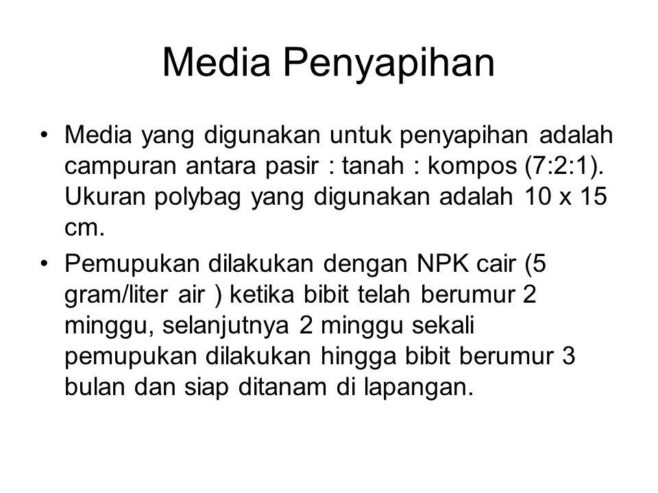 Media Penyapihan