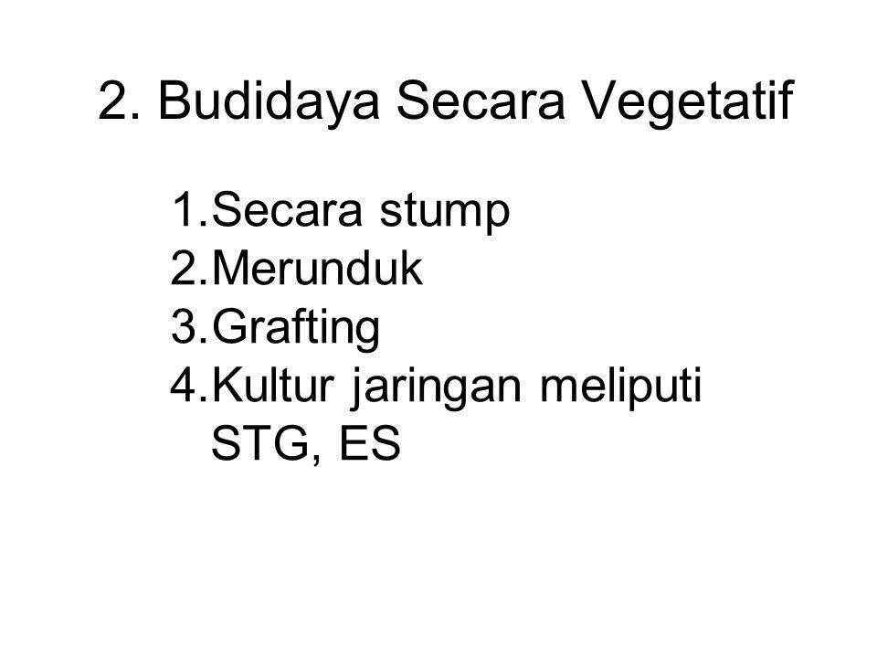 2. Budidaya Secara Vegetatif