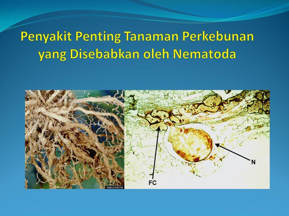 Penyakit Penting Tanaman Perkebunan yang Disebabkan oleh Nematoda