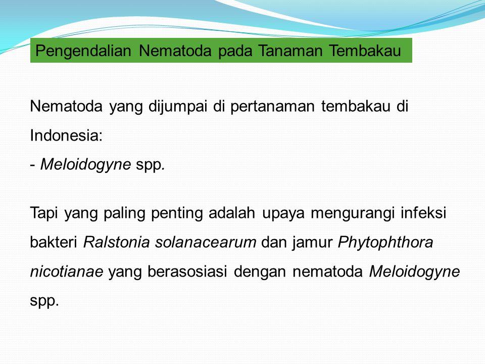 Pengendalian Nematoda pada Tanaman Tembakau