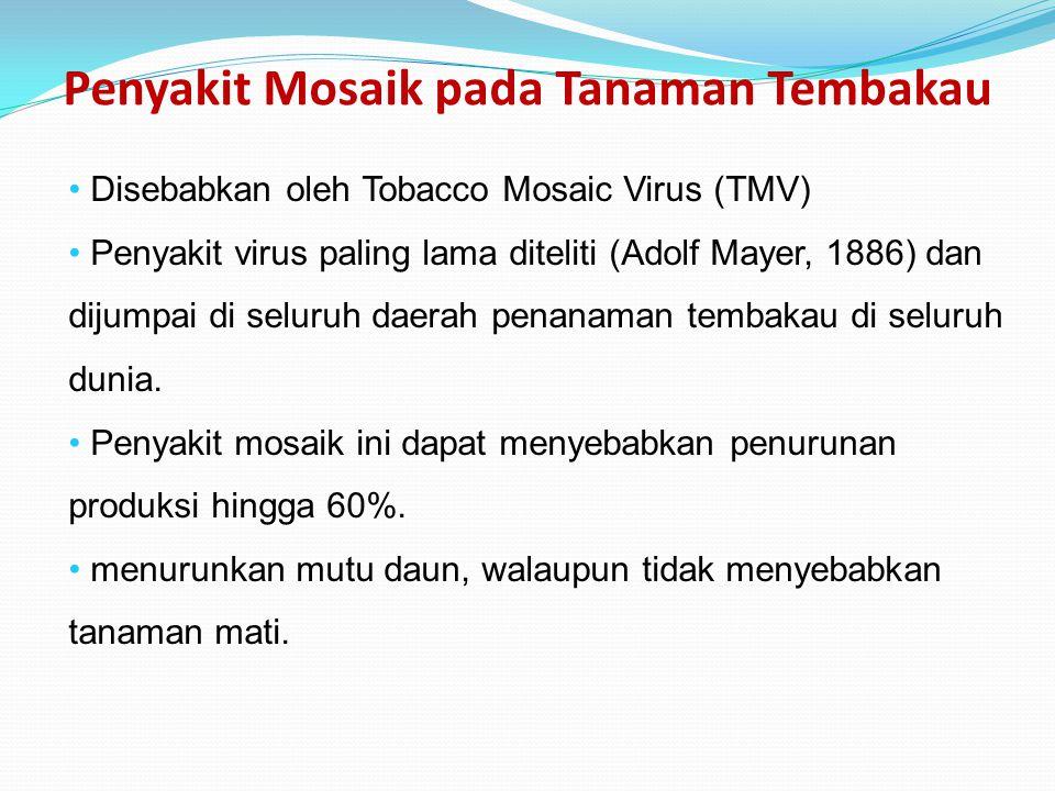 Penyakit Mosaik pada Tanaman Tembakau