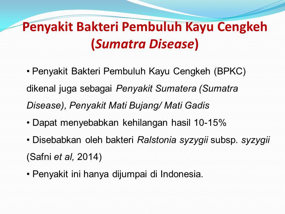 Penyakit Bakteri Pembuluh Kayu Cengkeh