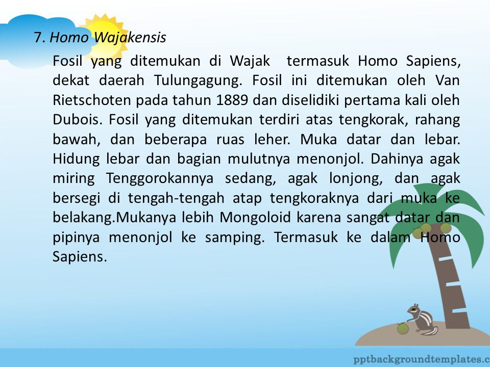 7. Homo Wajakensis