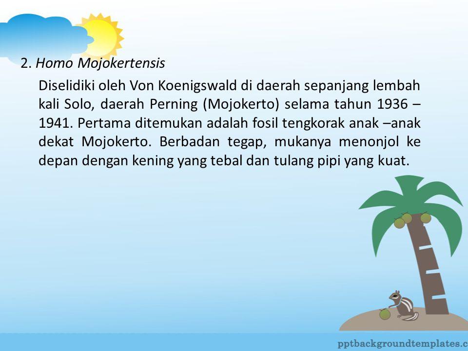 2. Homo Mojokertensis