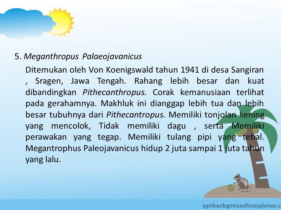 5. Meganthropus Palaeojavanicus
