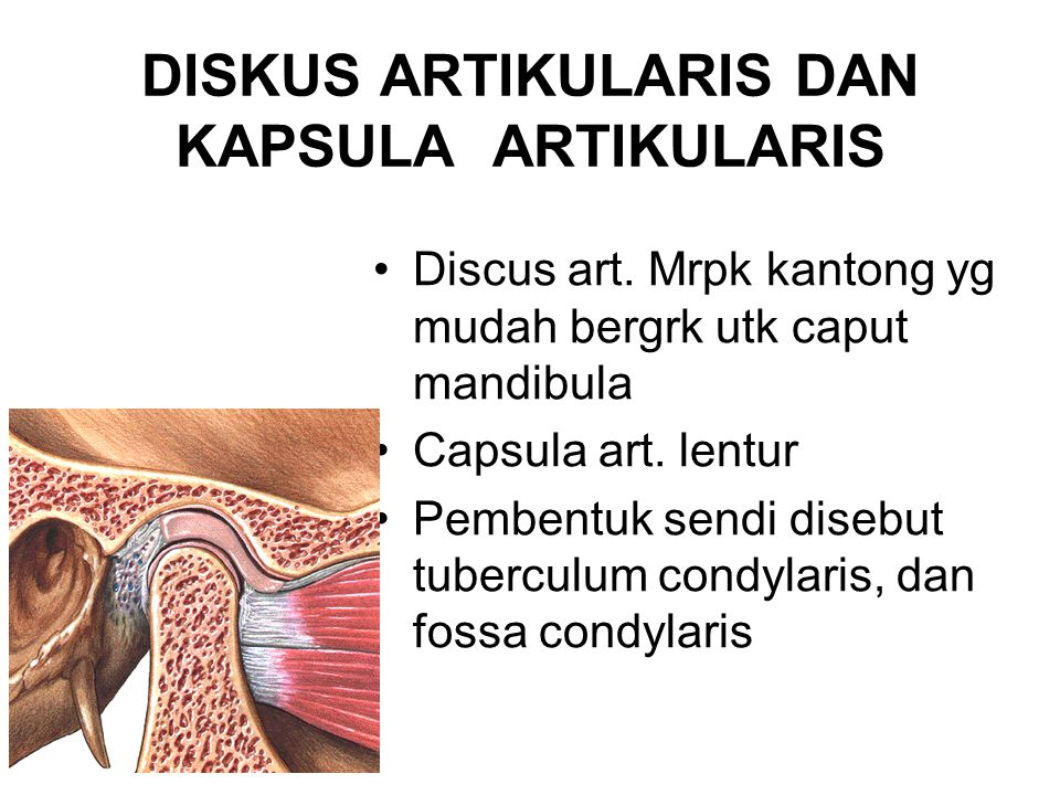 DISKUS ARTIKULARIS DAN KAPSULA ARTIKULARIS