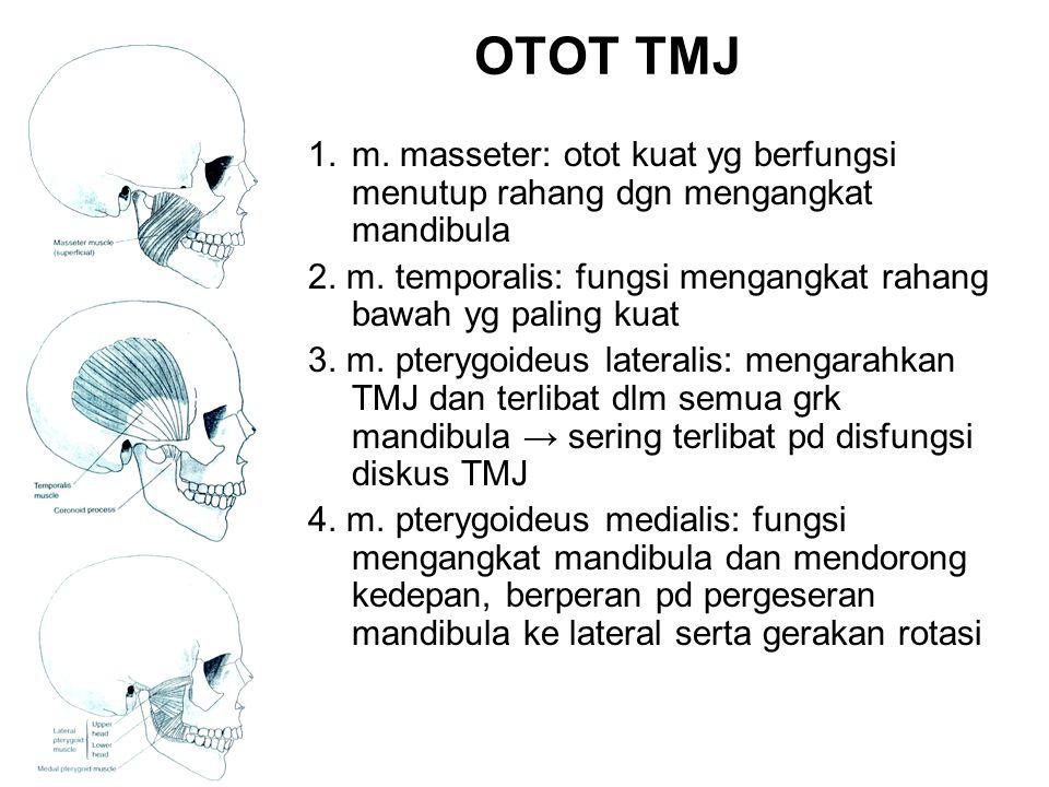 OTOT TMJ m. masseter: otot kuat yg berfungsi menutup rahang dgn mengangkat mandibula.