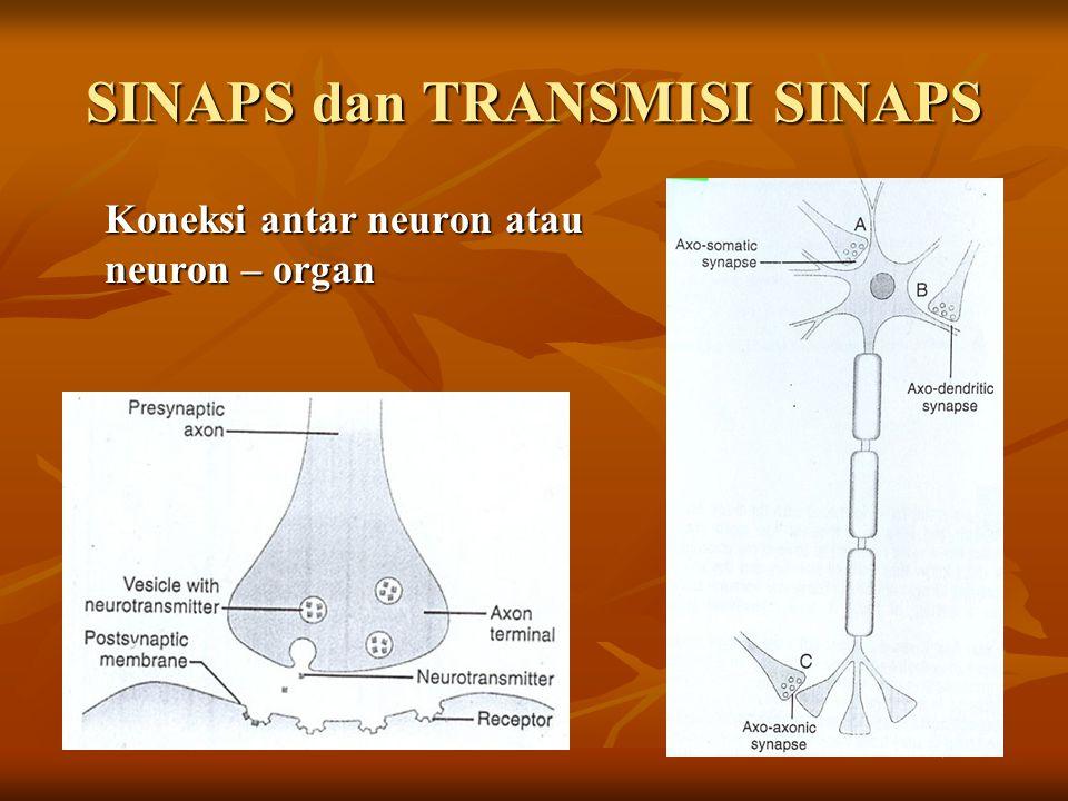 SINAPS dan TRANSMISI SINAPS