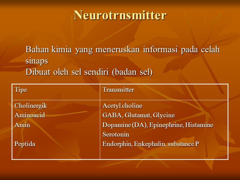 Neurotrnsmitter Bahan kimia yang meneruskan informasi pada celah sinaps Dibuat oleh sel sendiri (badan sel)