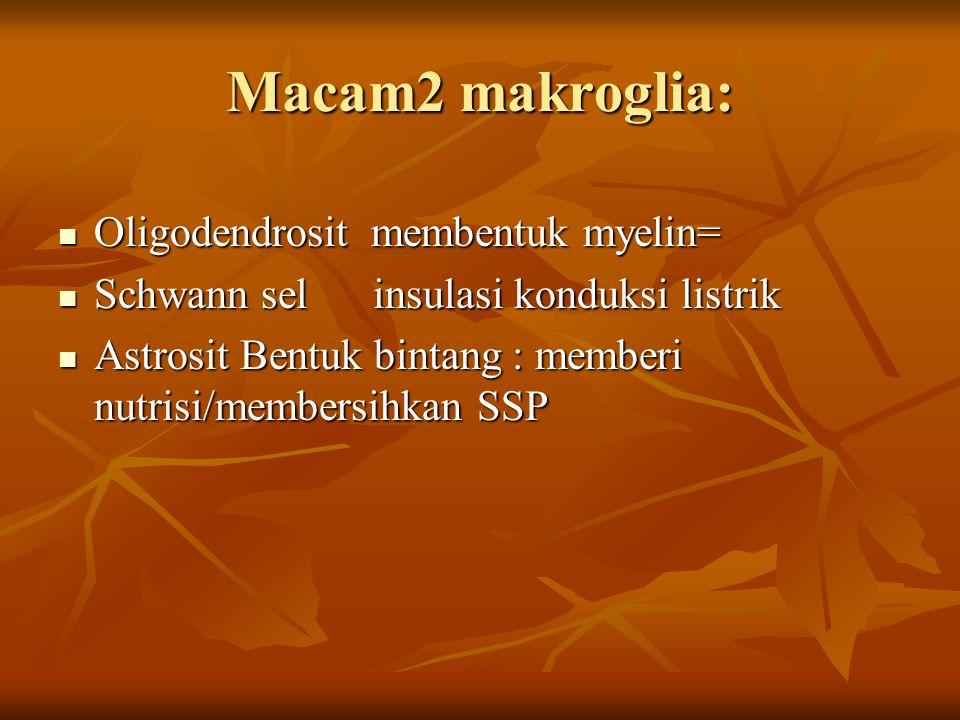 Macam2 makroglia: Oligodendrosit membentuk myelin=