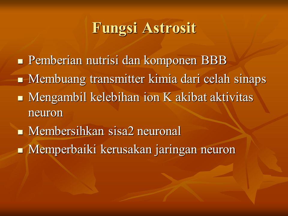 Fungsi Astrosit Pemberian nutrisi dan komponen BBB