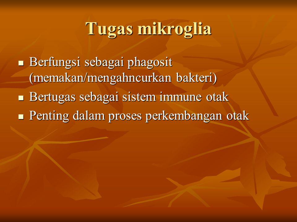 Tugas mikroglia Berfungsi sebagai phagosit (memakan/mengahncurkan bakteri) Bertugas sebagai sistem immune otak.