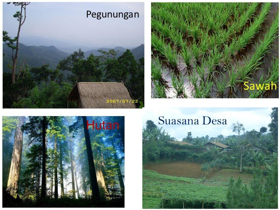 Pegunungan Sawah Suasana Desa Hutan