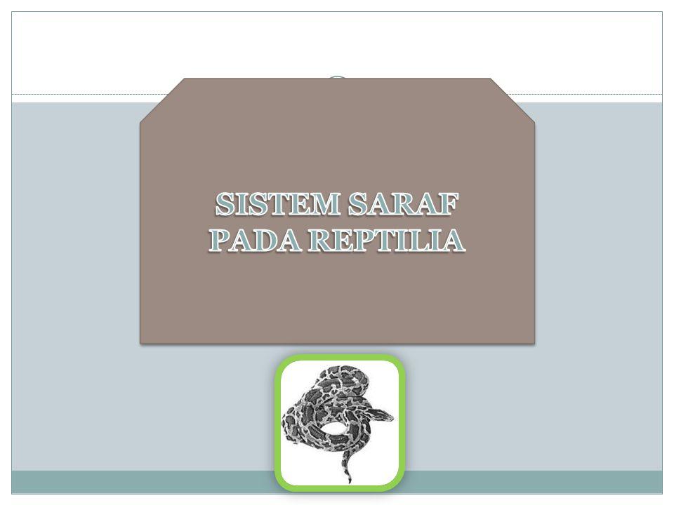 SISTEM SARAF PADA REPTILIA