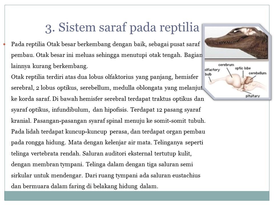 3. Sistem saraf pada reptilia