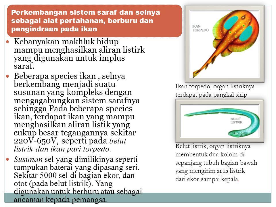 Perkembangan sistem saraf dan selnya sebagai alat pertahanan, berburu dan pengindraan pada ikan
