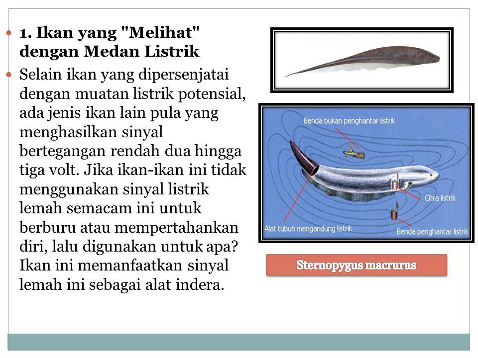 1. Ikan yang Melihat dengan Medan Listrik