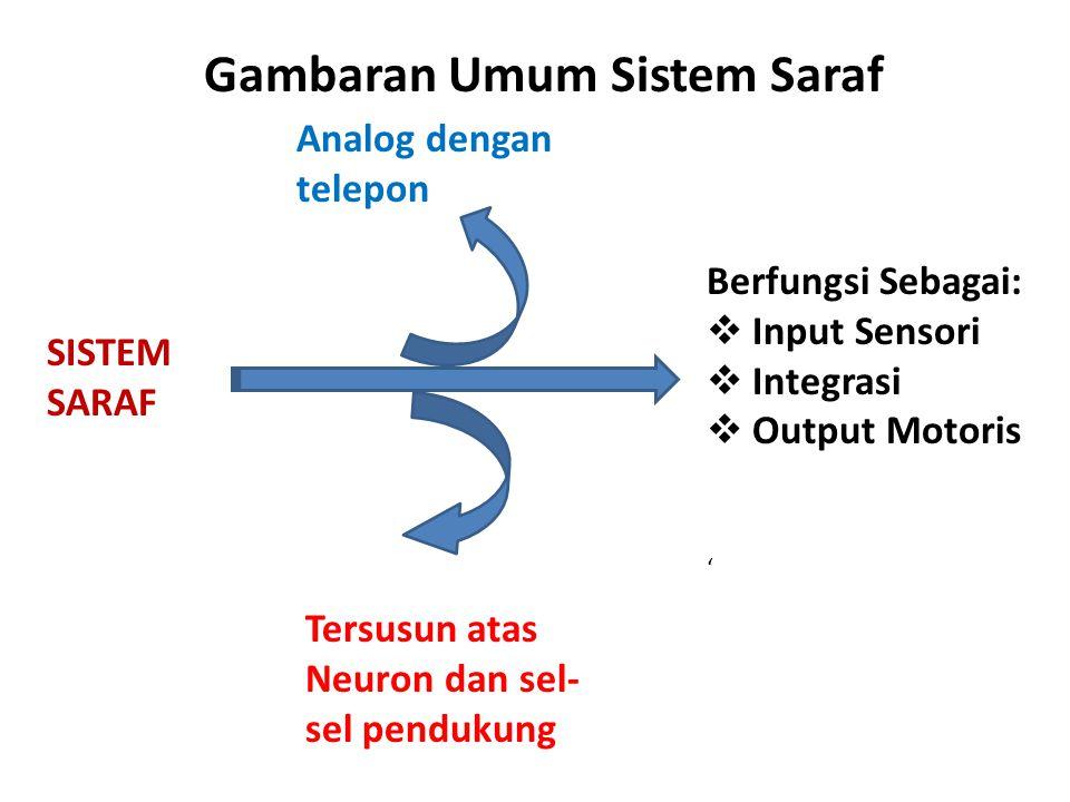 Gambaran Umum Sistem Saraf