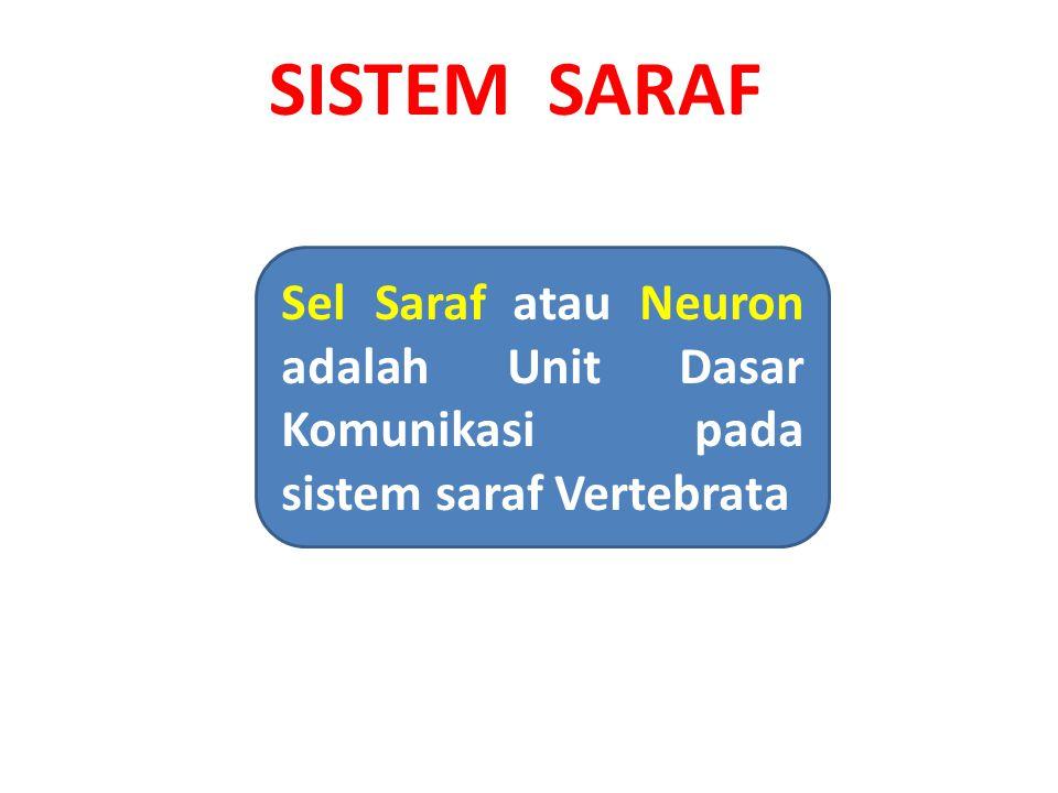SISTEM SARAF Sel Saraf atau Neuron adalah Unit Dasar Komunikasi pada sistem saraf Vertebrata