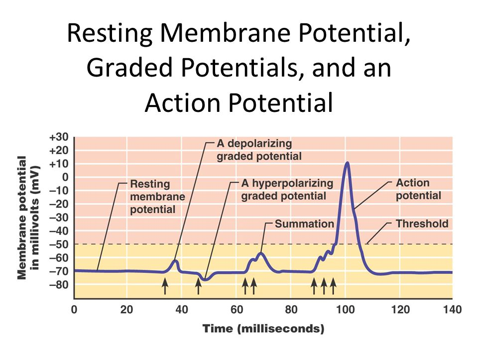 Resting Membrane Potential, Graded Potentials, and an Action Potential