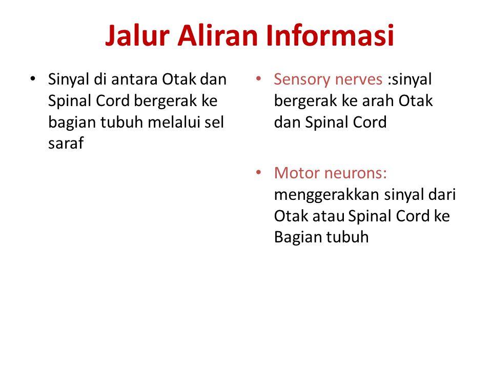Jalur Aliran Informasi