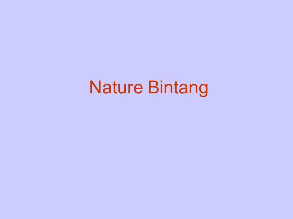 Nature Bintang