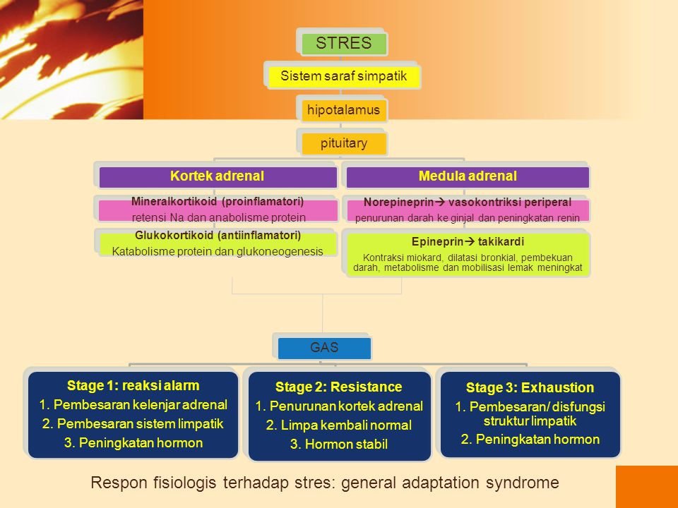 Respon fisiologis terhadap stres: general adaptation syndrome