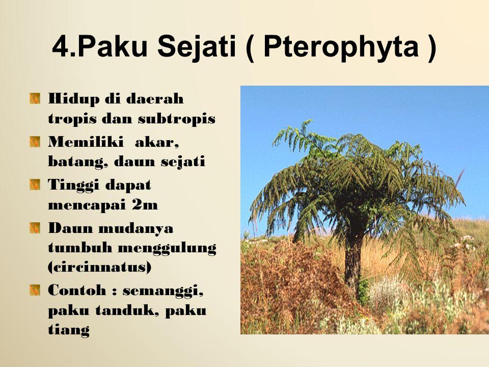 4.Paku Sejati ( Pterophyta )