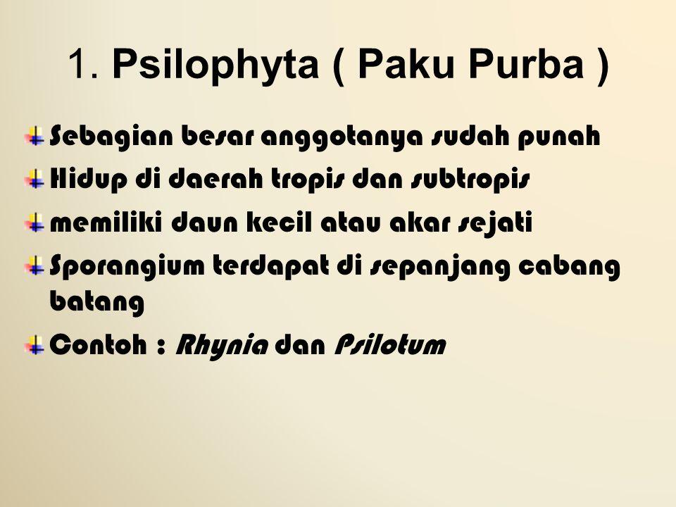 1. Psilophyta ( Paku Purba )
