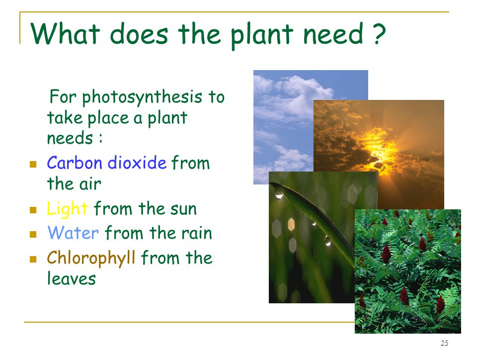 What does the plant need