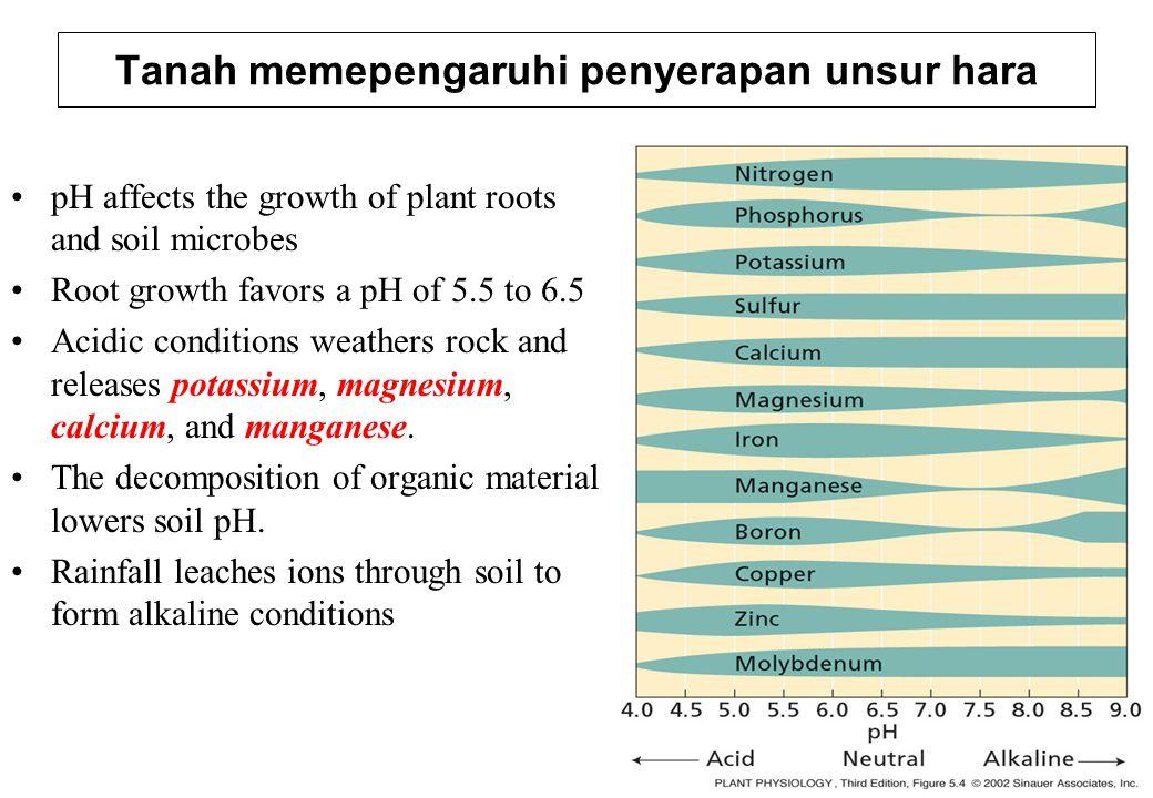 Tanah memepengaruhi penyerapan unsur hara
