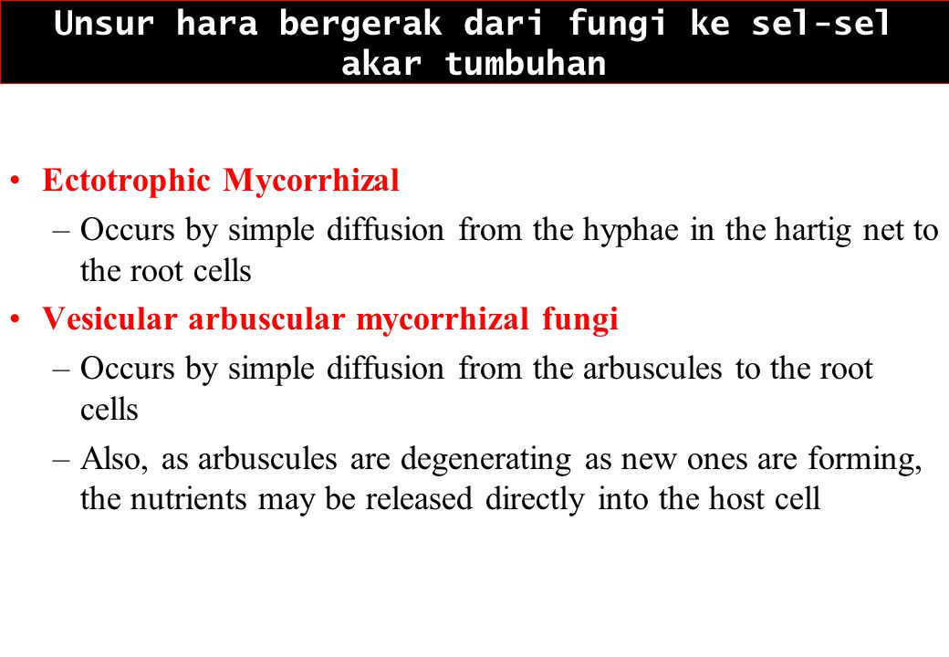 Unsur hara bergerak dari fungi ke sel-sel akar tumbuhan