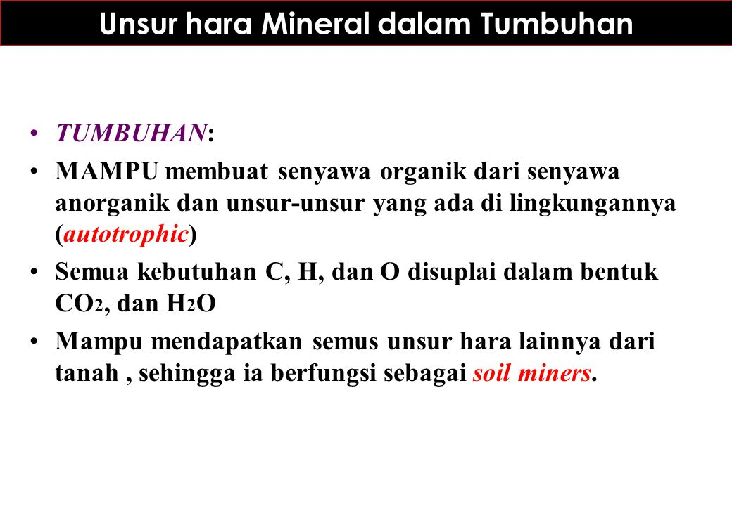 Unsur hara Mineral dalam Tumbuhan