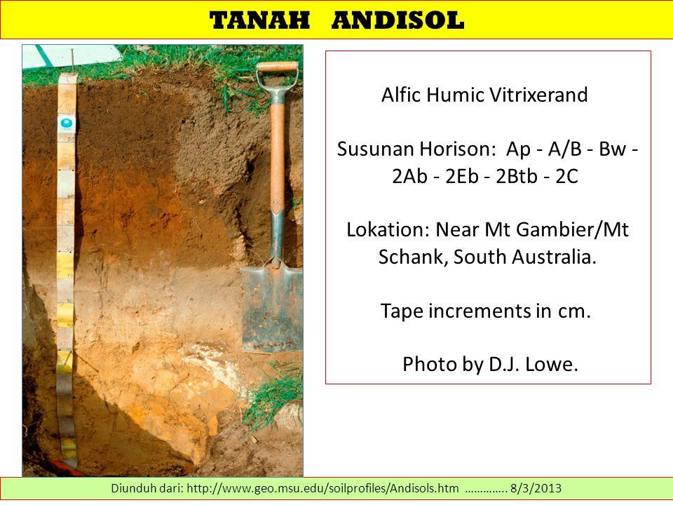 TANAH ANDISOL Alfic Humic Vitrixerand