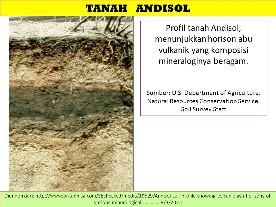 TANAH ANDISOL Profil tanah Andisol, menunjukkan horison abu vulkanik yang komposisi mineraloginya beragam.