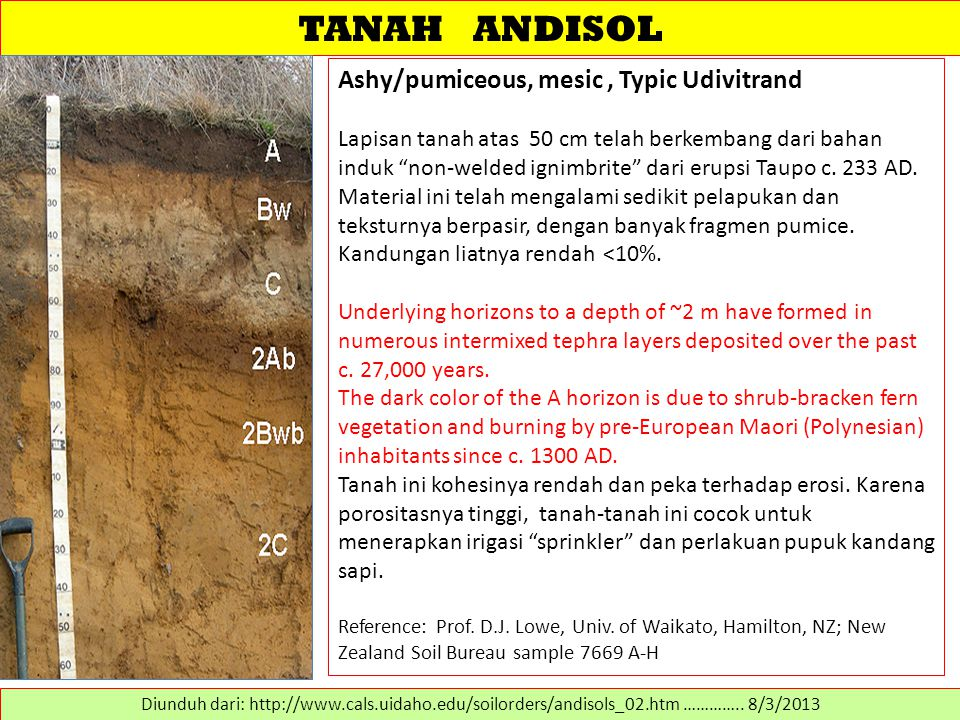 TANAH ANDISOL Ashy/pumiceous, mesic , Typic Udivitrand