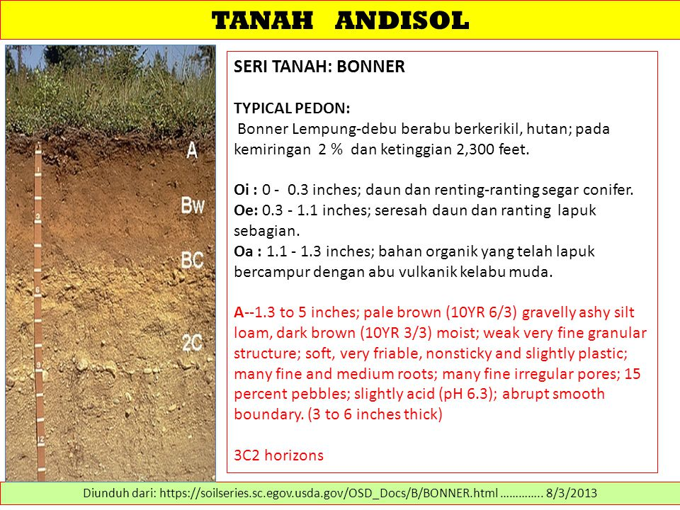 TANAH ANDISOL SERI TANAH: BONNER TYPICAL PEDON: