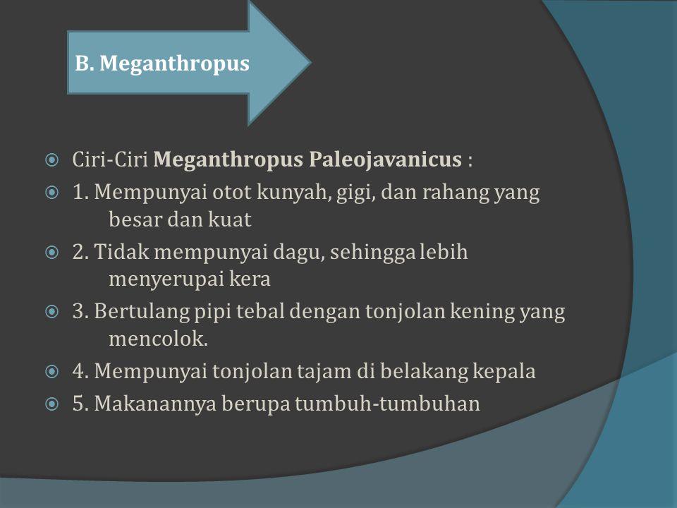 B. Meganthropus Ciri-Ciri Meganthropus Paleojavanicus : 1. Mempunyai otot kunyah, gigi, dan rahang yang besar dan kuat.