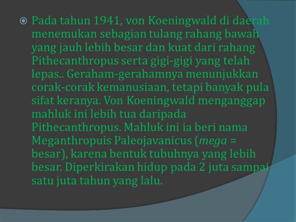 Pada tahun 1941, von Koeningwald di daerah menemukan sebagian tulang rahang bawah yang jauh lebih besar dan kuat dari rahang Pithecanthropus serta gigi-gigi yang telah lepas..