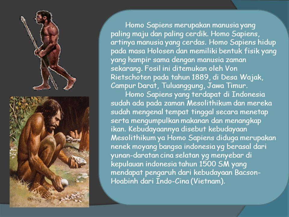 Homo Sapiens merupakan manusia yang paling maju dan paling cerdik