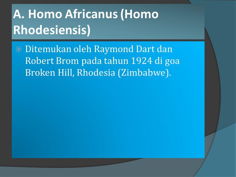 A. Homo Africanus (Homo Rhodesiensis)