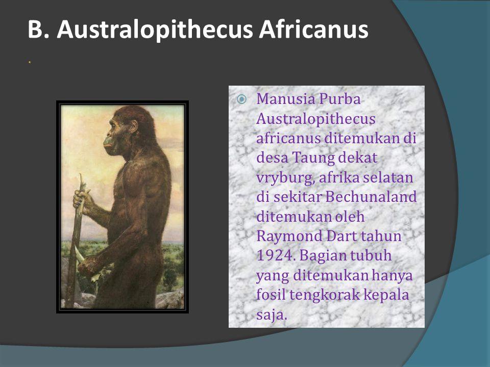 B. Australopithecus Africanus