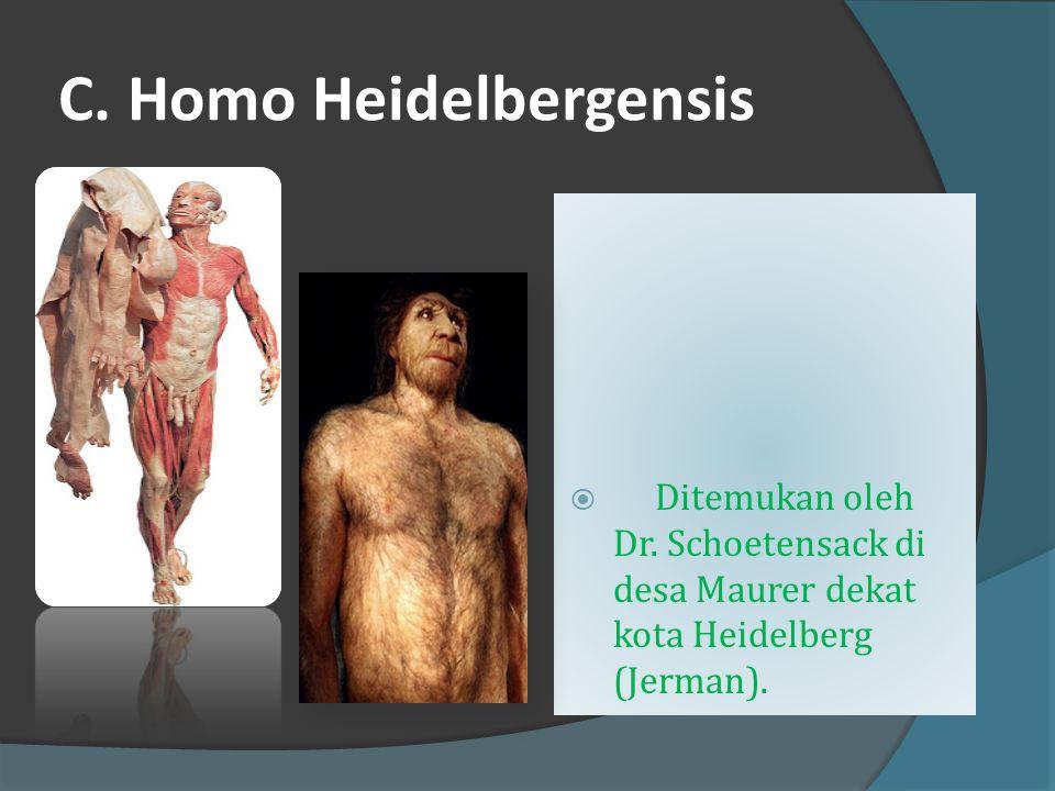 C. Homo Heidelbergensis