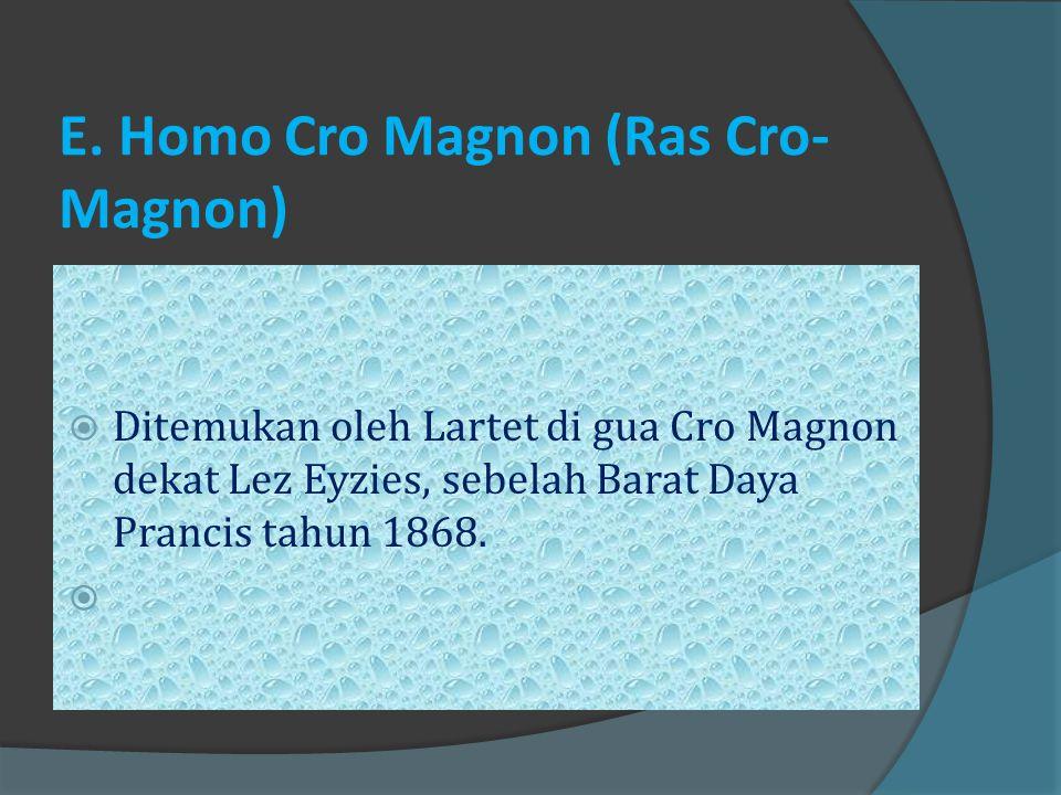 E. Homo Cro Magnon (Ras Cro-Magnon)