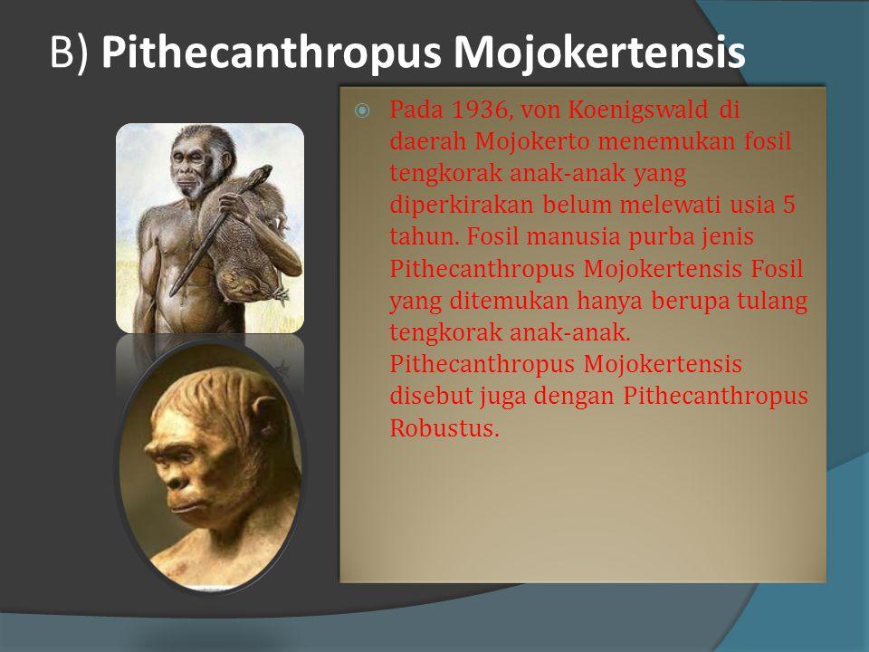 B) Pithecanthropus Mojokertensis